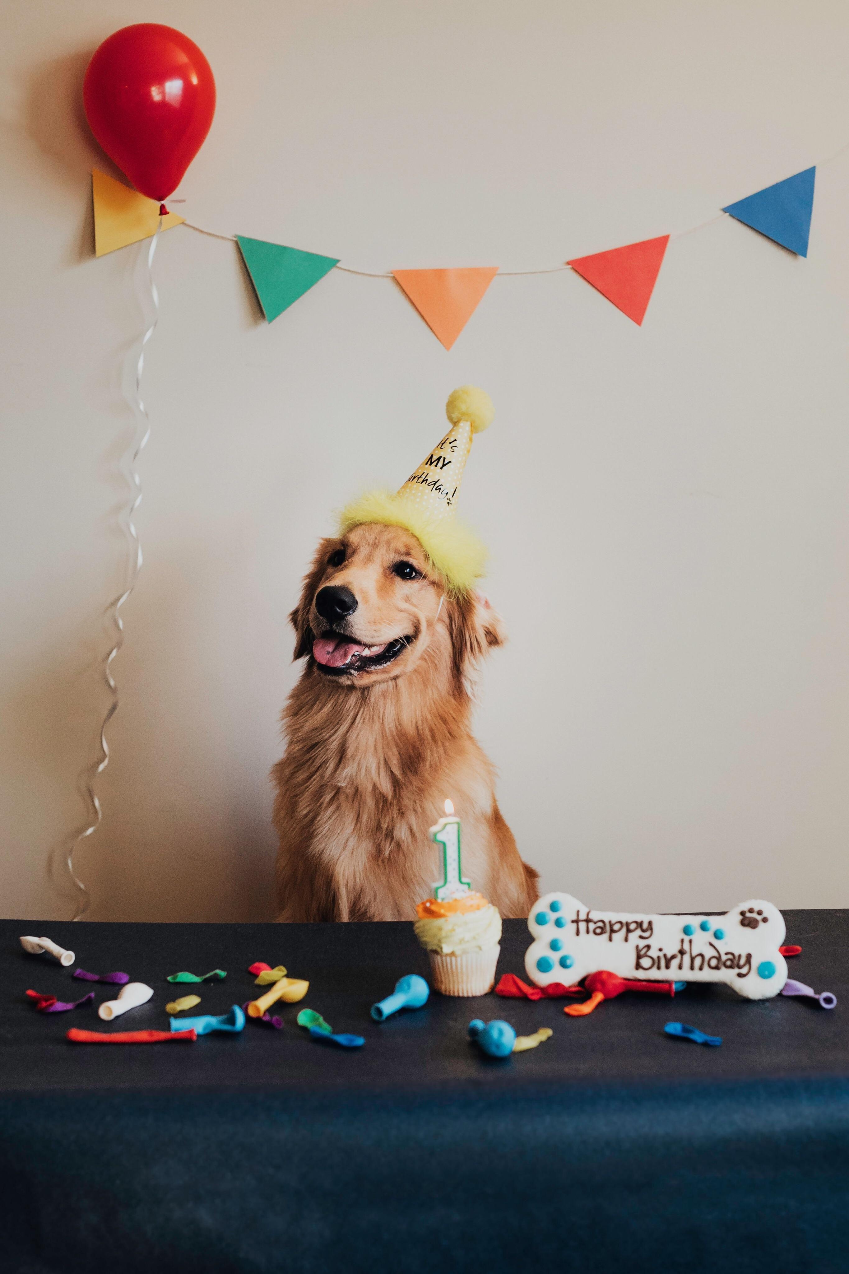 My Boy Lewis Turned 1 Puppy Birthday Dog First Birthday Cute