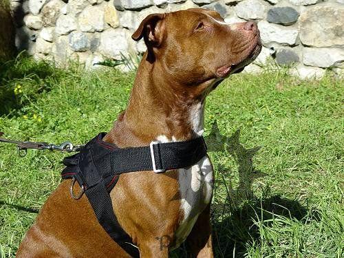 Training Nylon Dog Harness for #Pitbull   Adorable   Pinterest ...