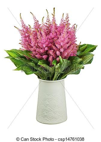 Stock Photo - Colorful bouquet from astilbe and funkia flowers in vase isolated on white background. Closeup. - stock image, images, royalty free photo, stock photos, stock photograph, stock photographs, picture, pictures, graphic, graphics