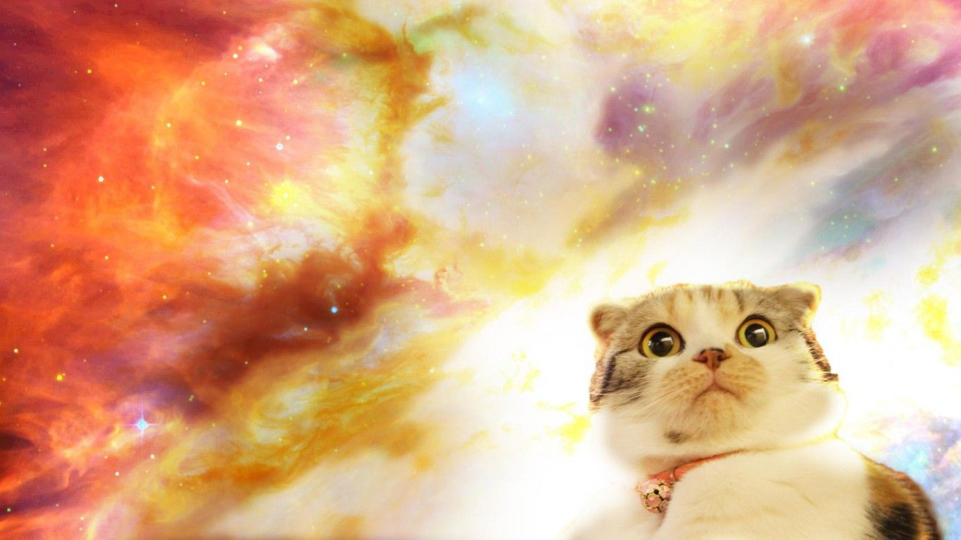 Space Cat Hd Wallpaper Cats Pinterest Cats Space Cat And