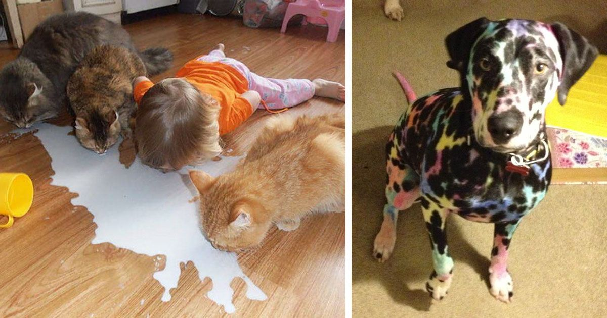 10 reasons why you shouldn t leave your pets with kids bored