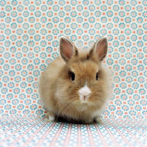 Pin Von Johanna Propstl Auf Hasen Rabbits Mit Bildern Hasen Bilder Hasenbilder Hase