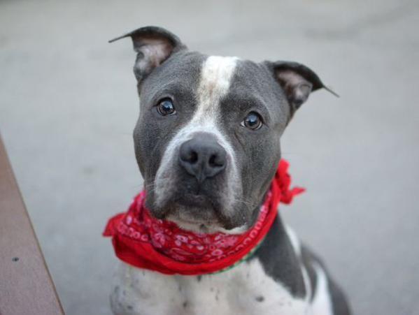 (157) Twitter Pet adoption, Losing a pet, Foster to adopt