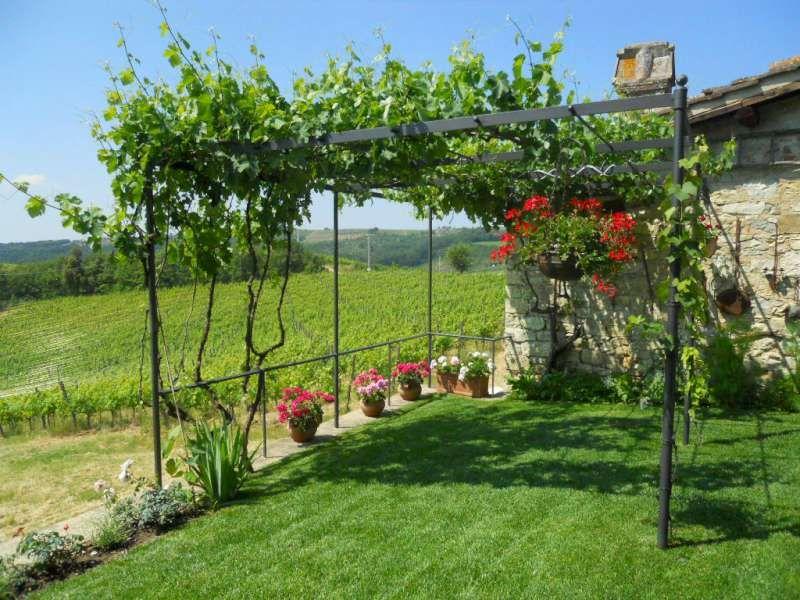 Pergola in ferro con uva feste all 39 aperto pinterest for Layout di patio all aperto