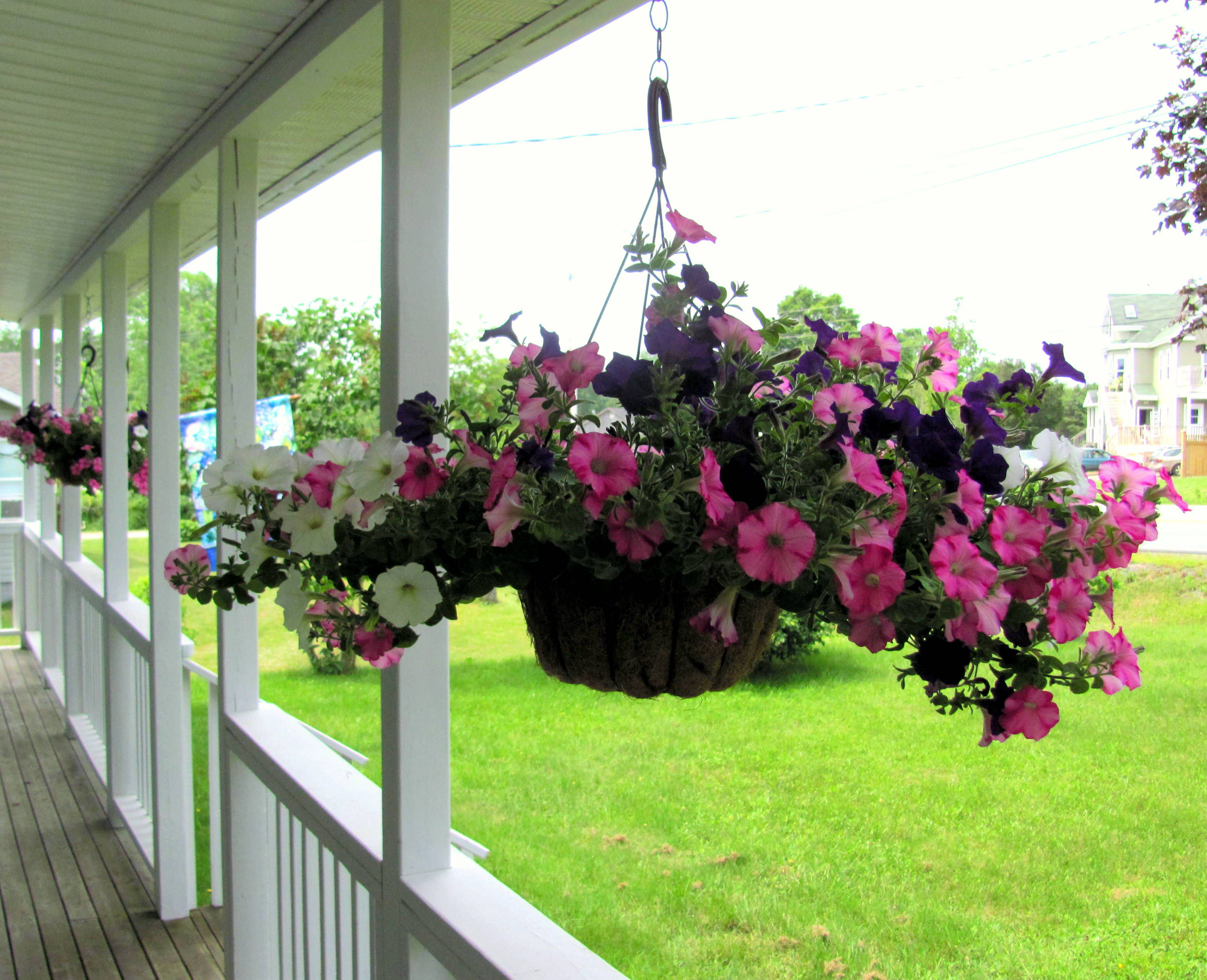 Wave Petunia Hanging Basket With Images Petunia Hanging