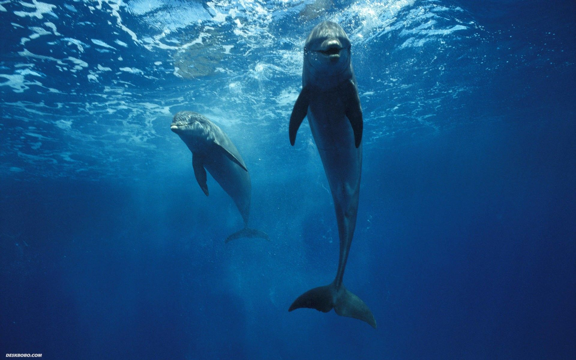 Who doesn't love the intoxicating and loving smile of a dolphin?!!! They are among the most beautiful creatures in the world (I think, anyway)!