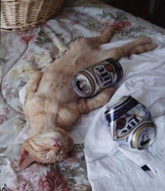 Friday Fun Cats And Beer Fanobook Gato Borracho Perros Y Gatos Graciosos Imagenes De Humor