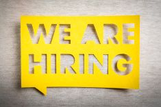 We Are Hiring On Yellow Speech Bubble Job Board Design Stock