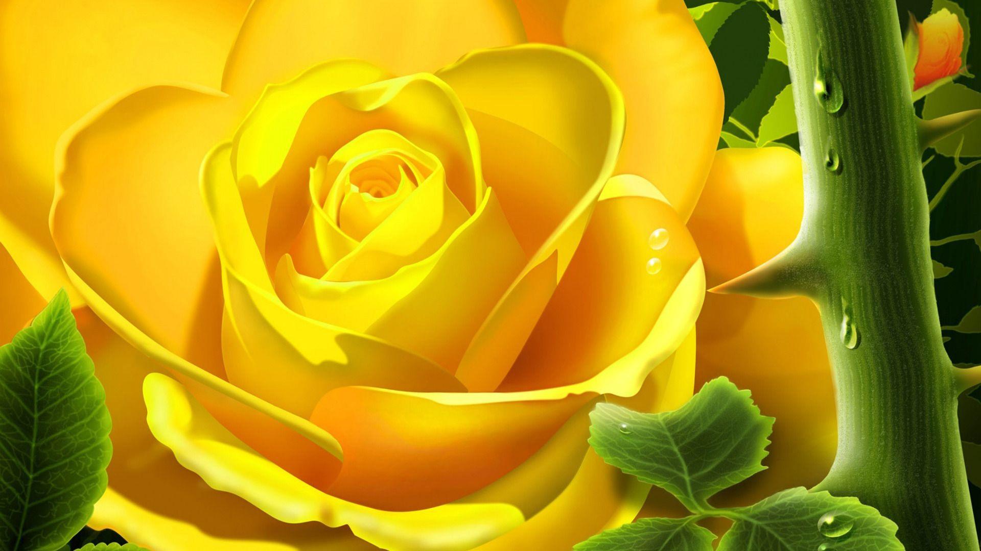 3d Yellow Rose Wallpaper Yellow Flower Wallpaper Yellow Roses Yellow Rose Flower