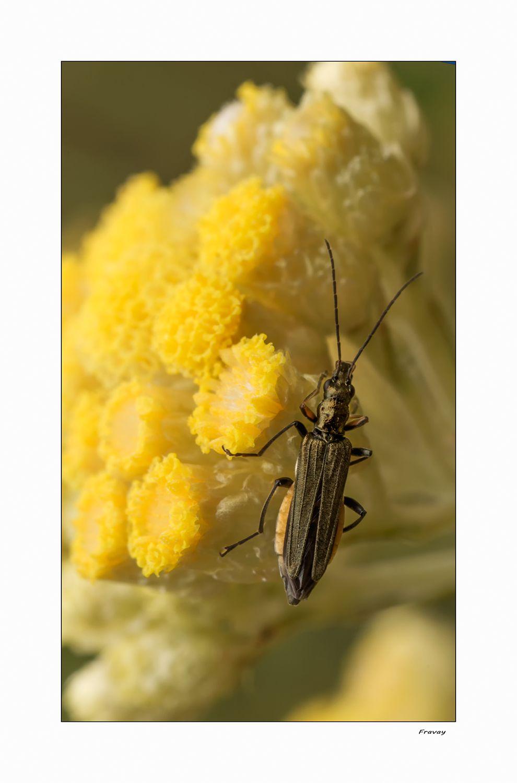Insecto on Revelartfotografía  http://www.revelartfotografia.org/wp-content/gallery/macro/0845.jpg