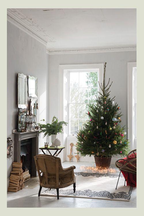 Balled Christmas Tree