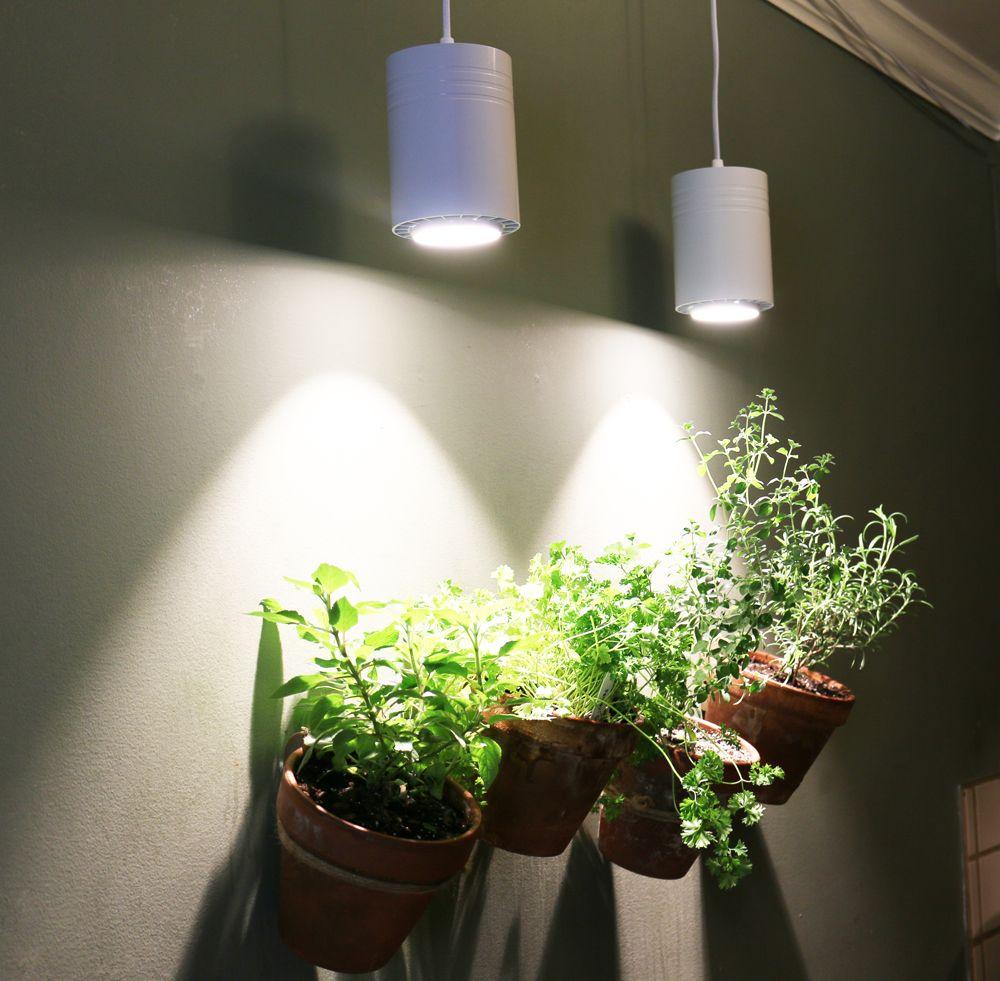 Use Full Spectrum Led Grow Lights For White Light Halleck Horticultural Plant Lighting Grow Lights For Plants Indoor Grow Lights