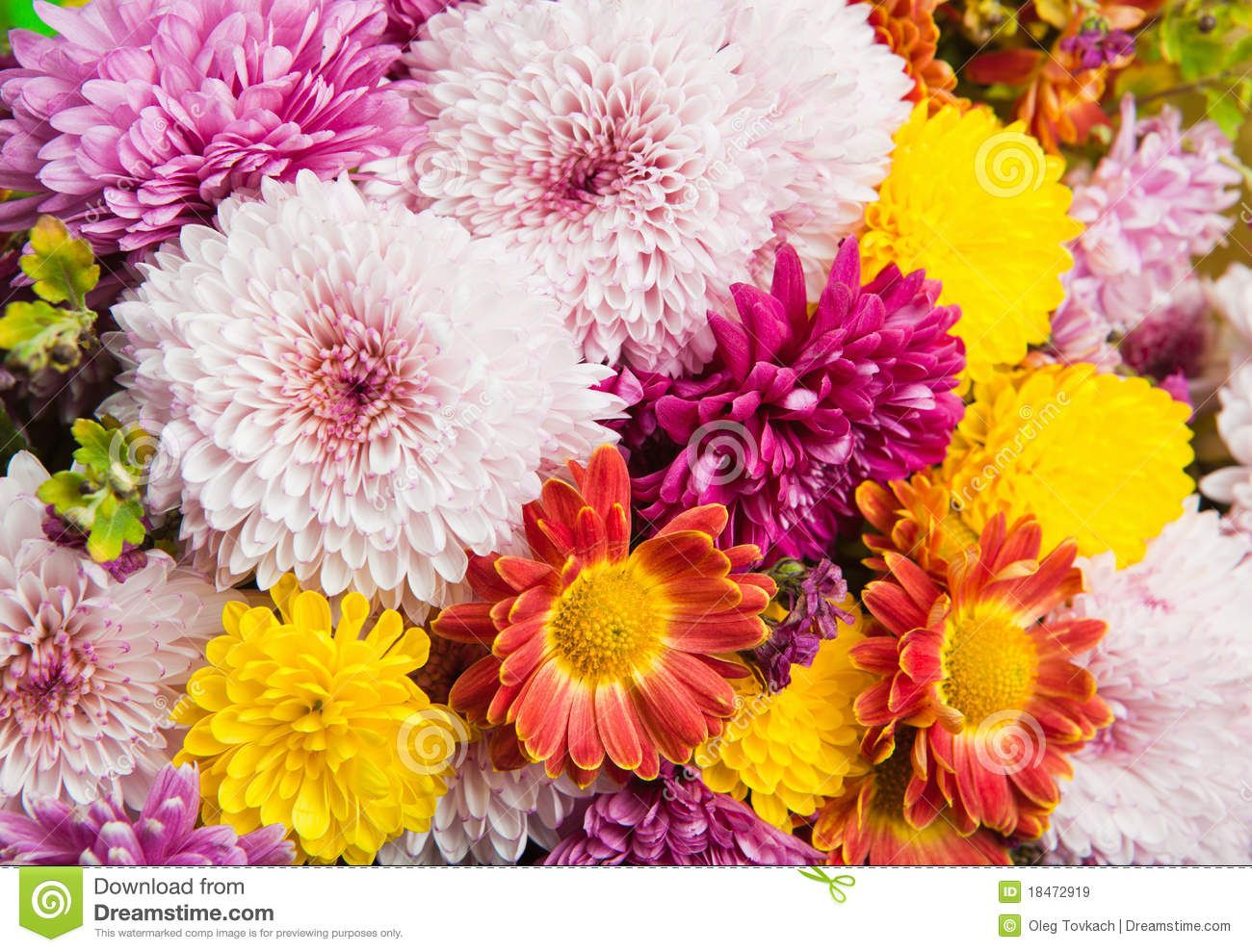 Colorful Daisy Flowers | Beautiful multi-colored bouquet from ...