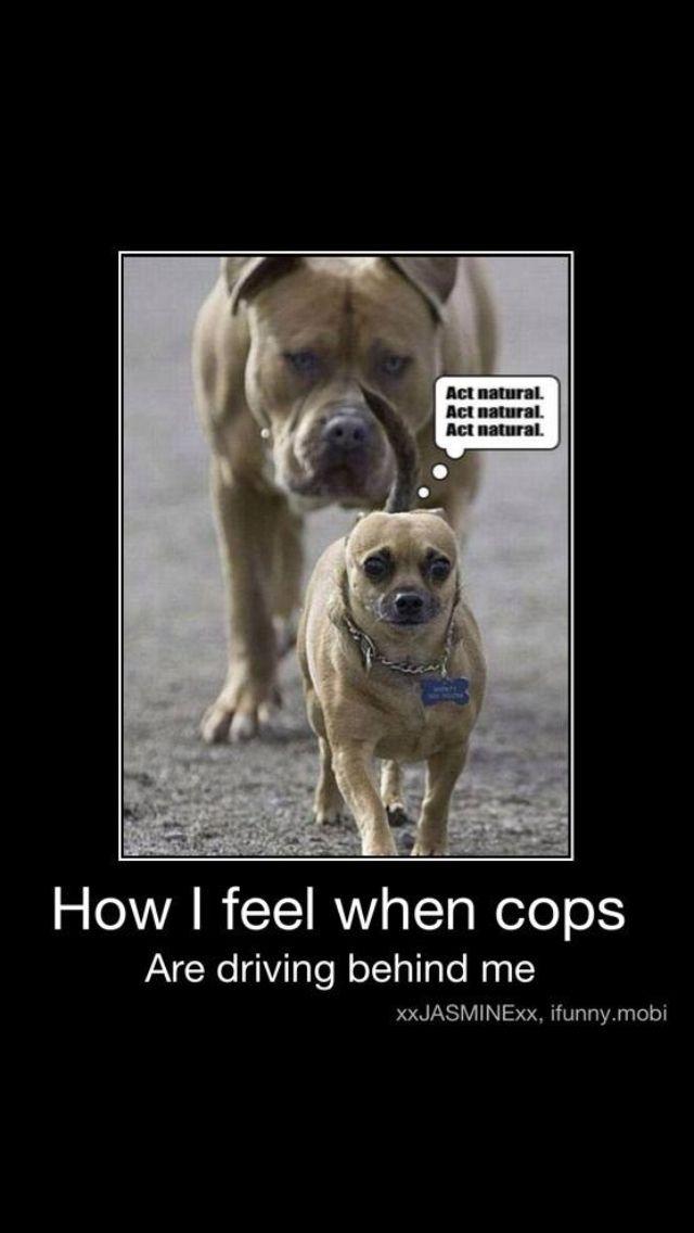 Hahahahaaa so funny #humor #dogs
