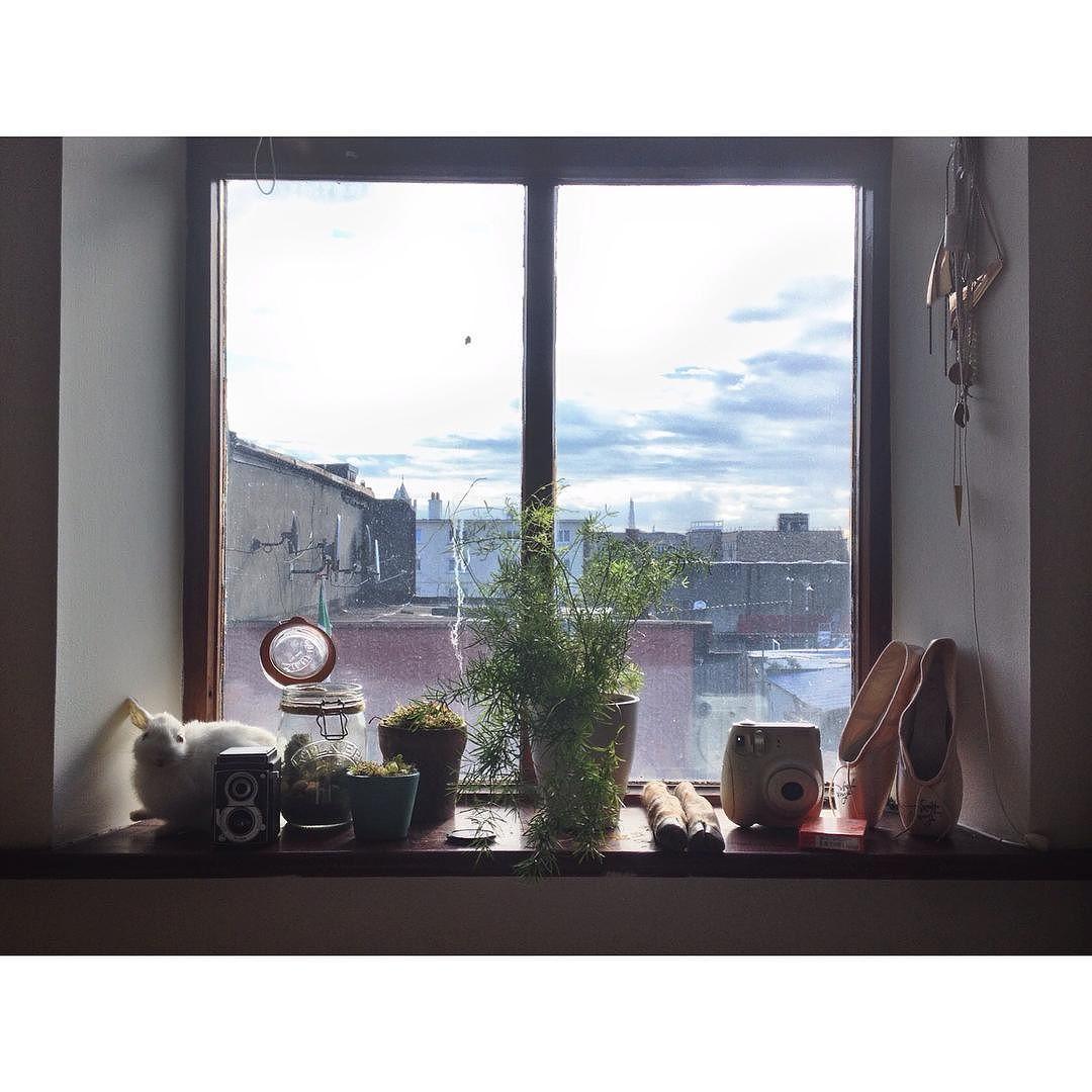 Good morning from Meath street. Photograph features my new Venus Fly Trap (named Mrs. Teapot) and a bird poo courtesy of the noisy pigeon fellas who act as my alarm clock every morning. #meathstreet #olddublin #pigeon #window #venusflytrap #thelibertes #plants #houseplants #asparagusplant #dublincity #discoverdublin #irishmornings #birds #heritagebuilding #home #apartment #canadiansinireland by haleygwendolyn