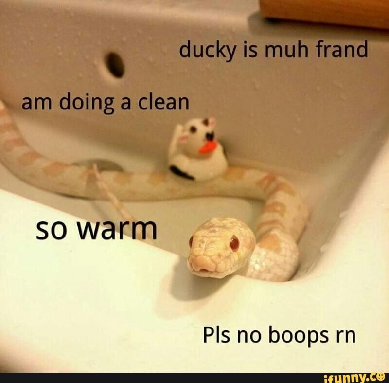 Pls No Boops Rn Ifunny Funny Wild Animals Cute Reptiles Cute Snake