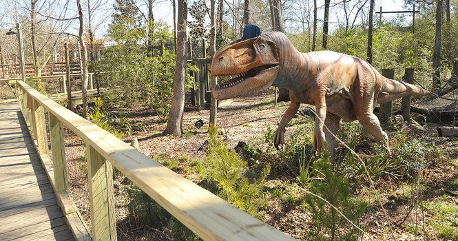Dino Discovery at the Birmingham Zoo features 15 live sized animatronic dinosaurs that are scattered along the trail through the Alabama Wilds section of the zoo.