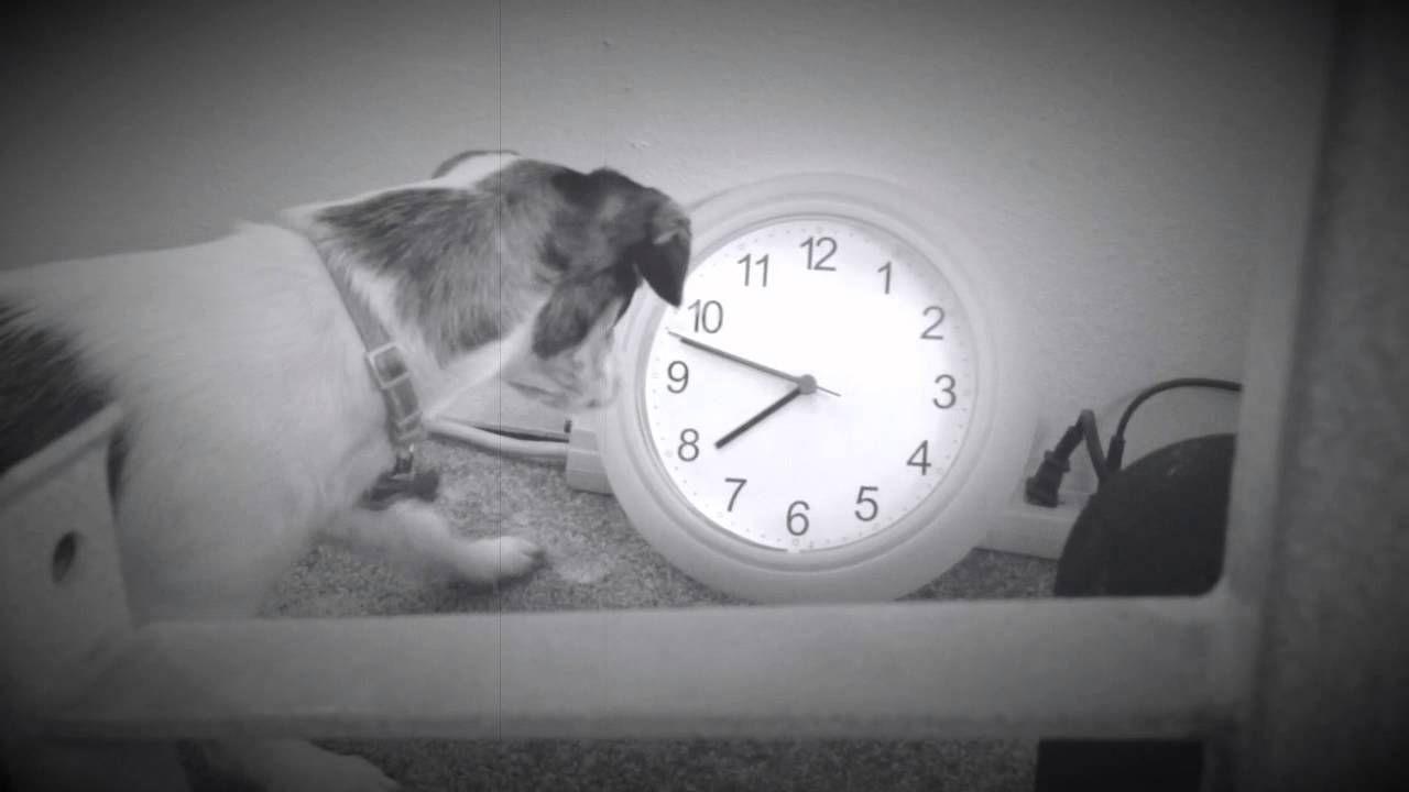 Xena And The Broken Clock Animal Photography Xena Clock