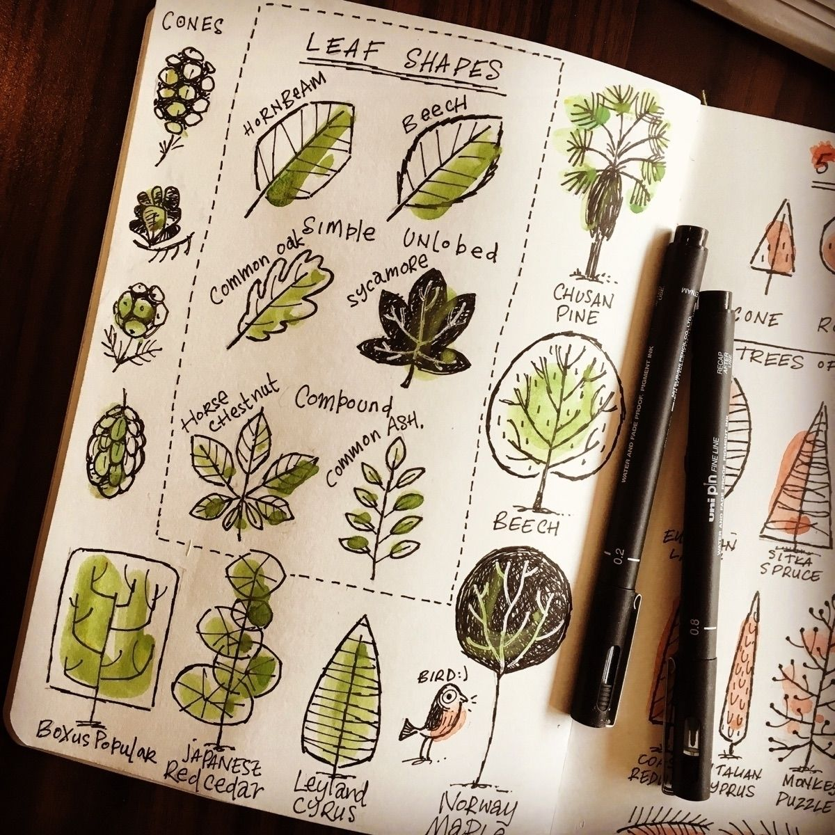 Trees pt2 leaf shapes sketchbook stevesimpson in