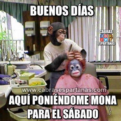 Mona Sabado Eso Es Imprescindible Buenos Dias Con Imagenes