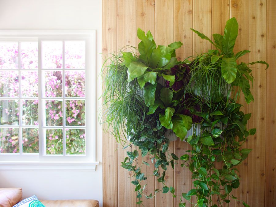 how to create a living wall garden