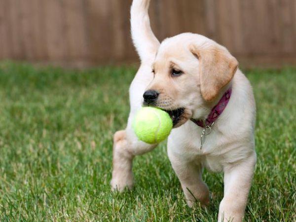 11 Gründe, weshalb du dir niemals einen Hund kaufen