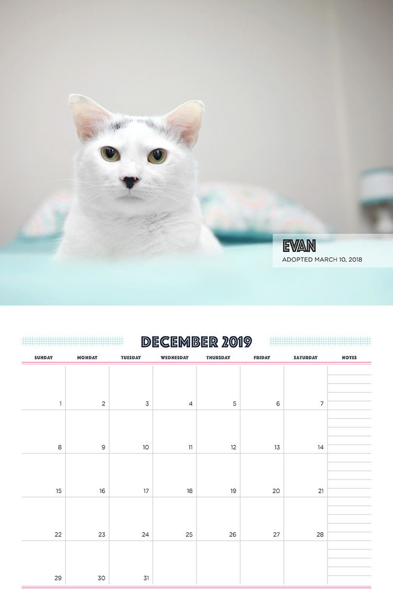 This Fundraising Calendar Is The Cat S Meow Fundraising Calendar Fundraising Cat Rescue
