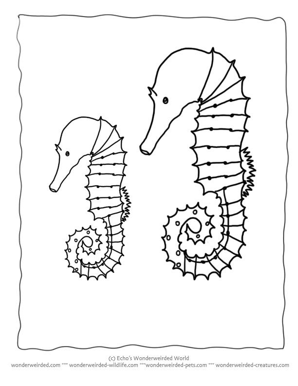 Free Seahorse Coloring Page Collection at www