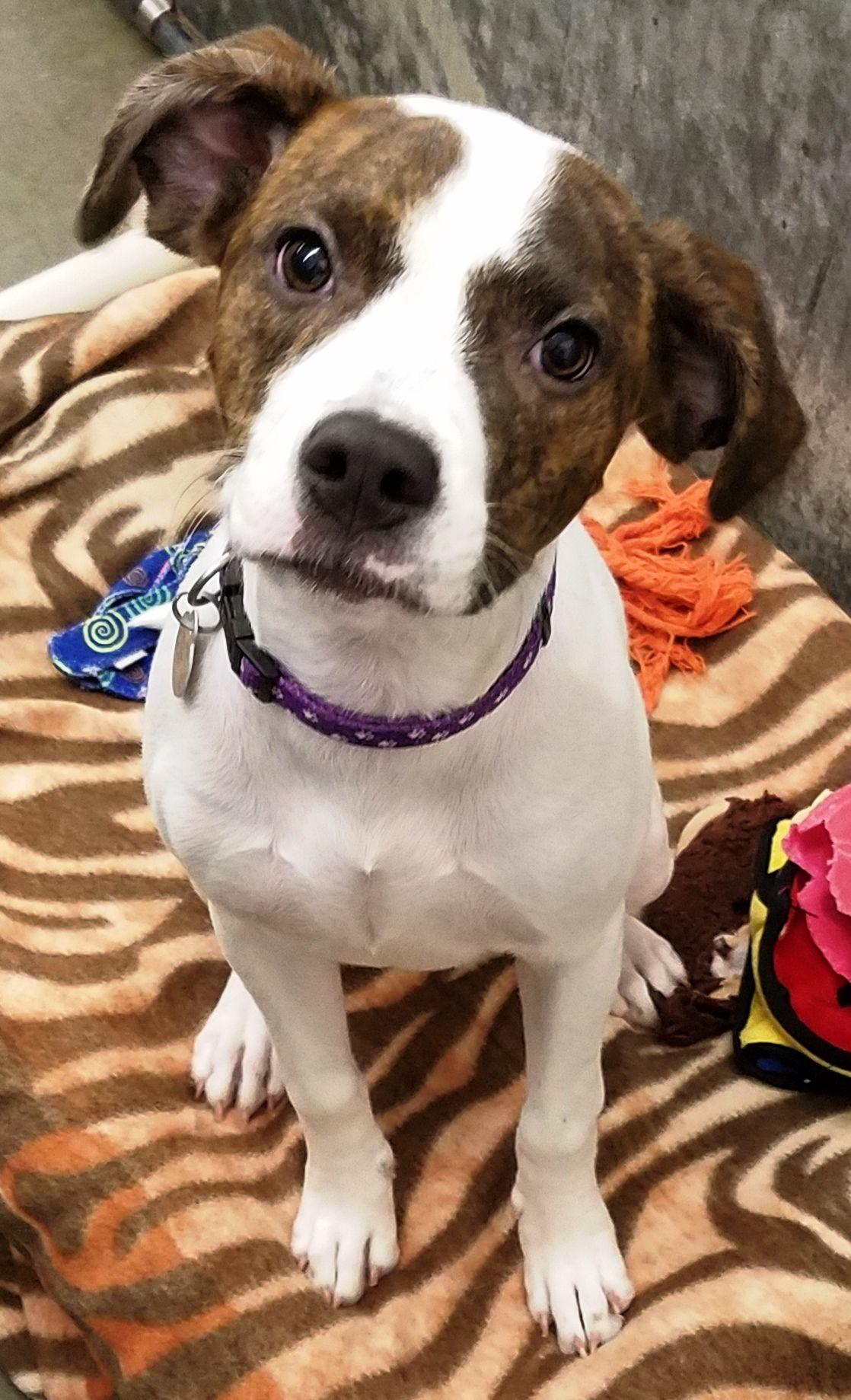 Adopt Lolli on Petfinder Pet adoption, Dog adoption, Pets