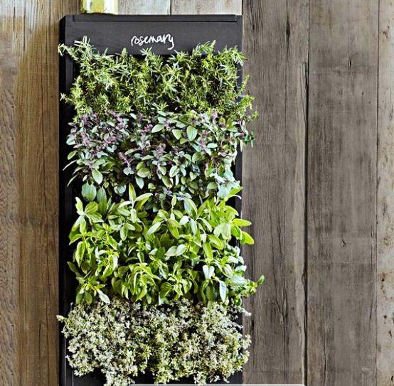 jard n vertical de hierbas medicinales y aromaticas