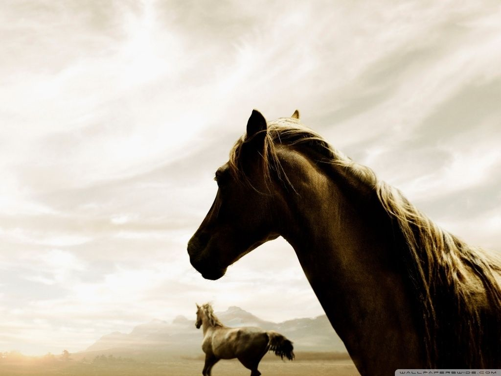 Simple Wallpaper Horse Photography - 81f91aca89f16030375399f2c1abd0d9  Photograph_152118.jpg
