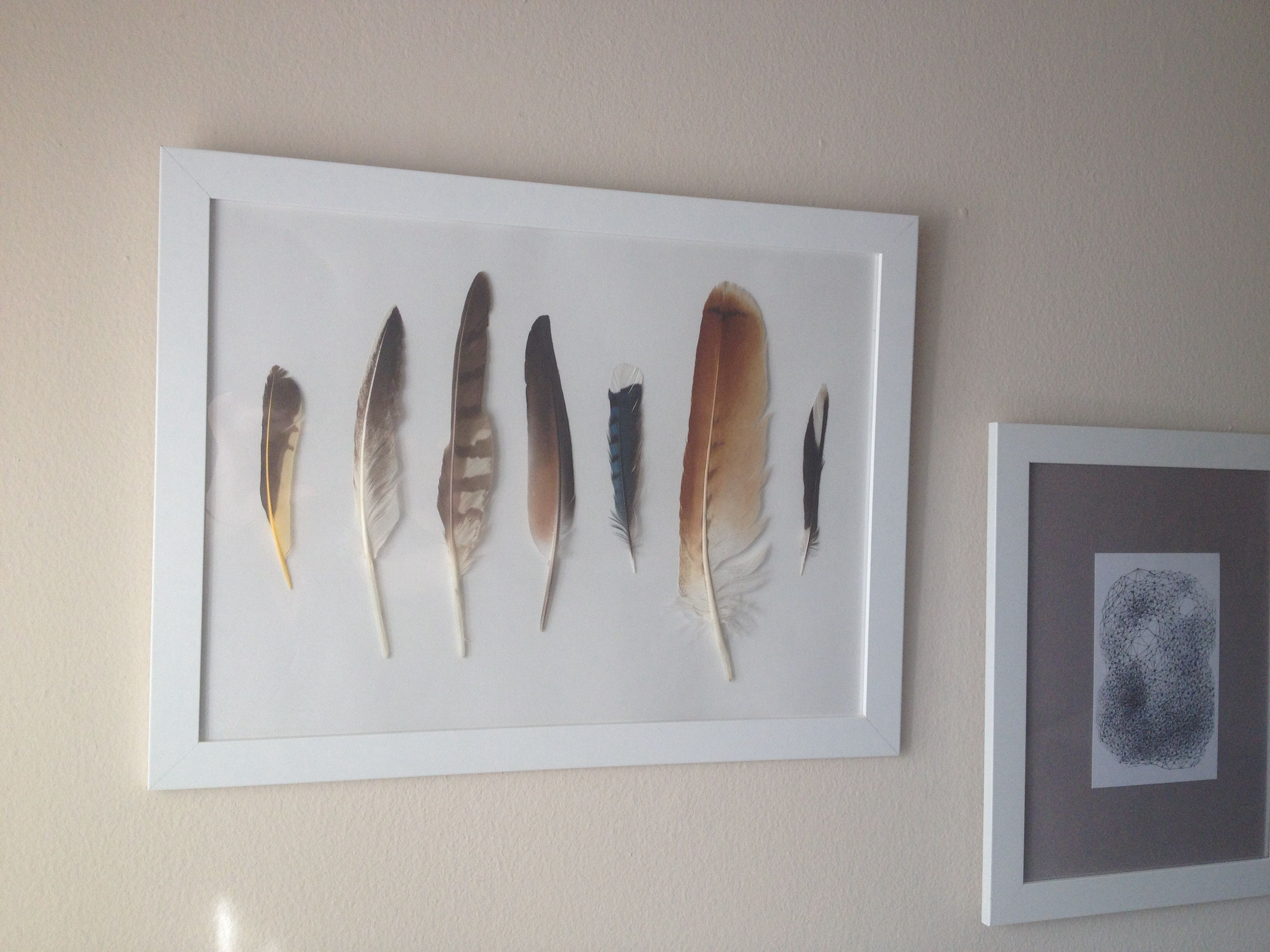 Framed Feathers Art Cottage Living Rooms Home