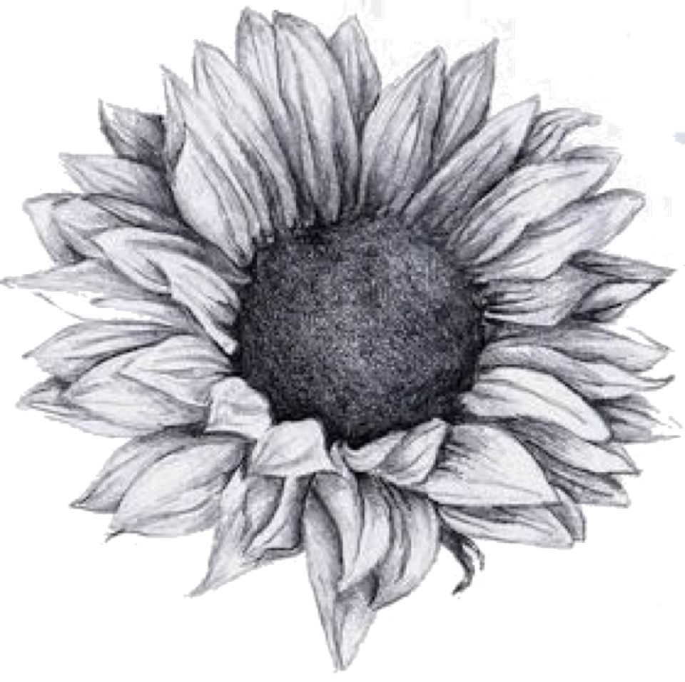 Uncategorized Sunflowers Drawing sunflower png lace art pinterest sunflowers tattoo and png