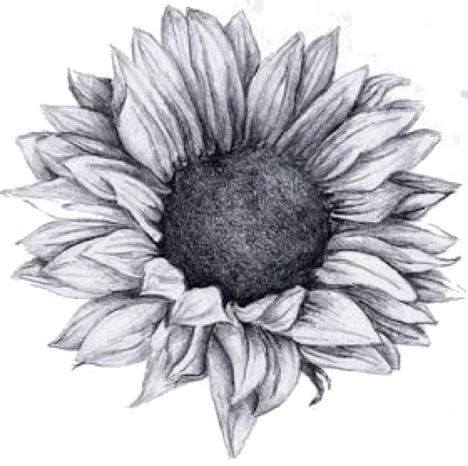 sunflower png   tattoos   Pinterest   Zeichnen lernen, Zeichnungen ...