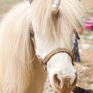 Unicorn horse costume / unicorn horn for horse / unicorn horn pony / realistic unicorn horn / unicorn horn browband / horse gifts for her