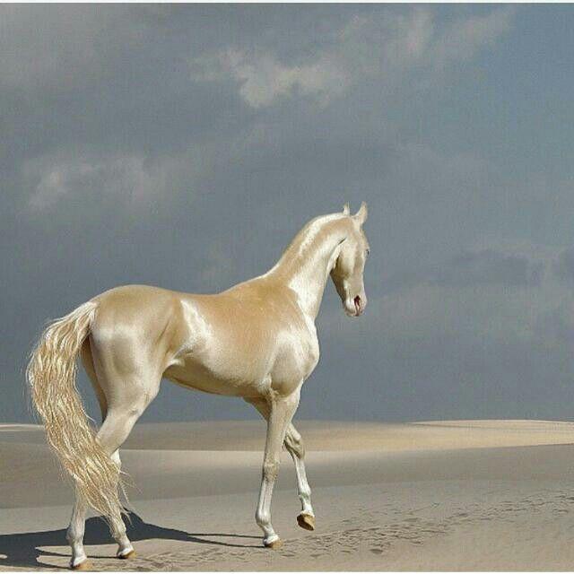 حصان ذهبي Rare Horses Horses Most Beautiful Horses