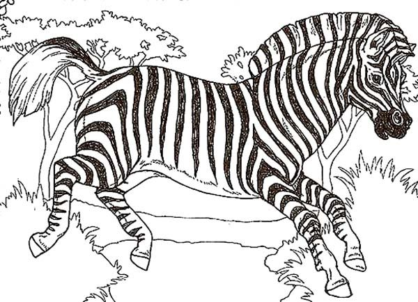 Zebra African Zebra Coloring Page