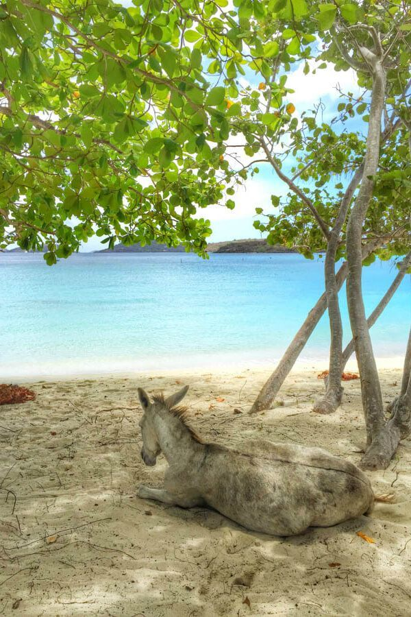 5 Unique Experiences In St John, USVI Including Watching