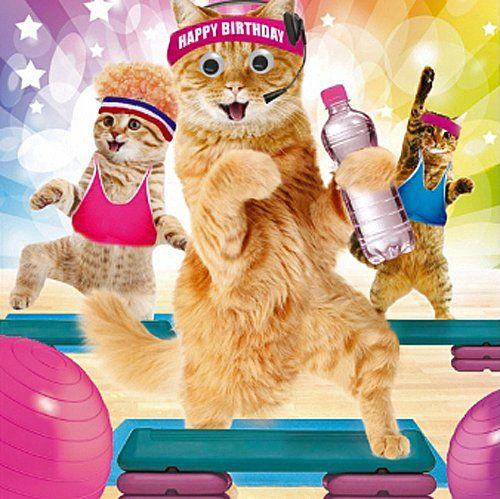 "Birthday Card ""Happy Birthday"" Funny Animals Gym Cats"