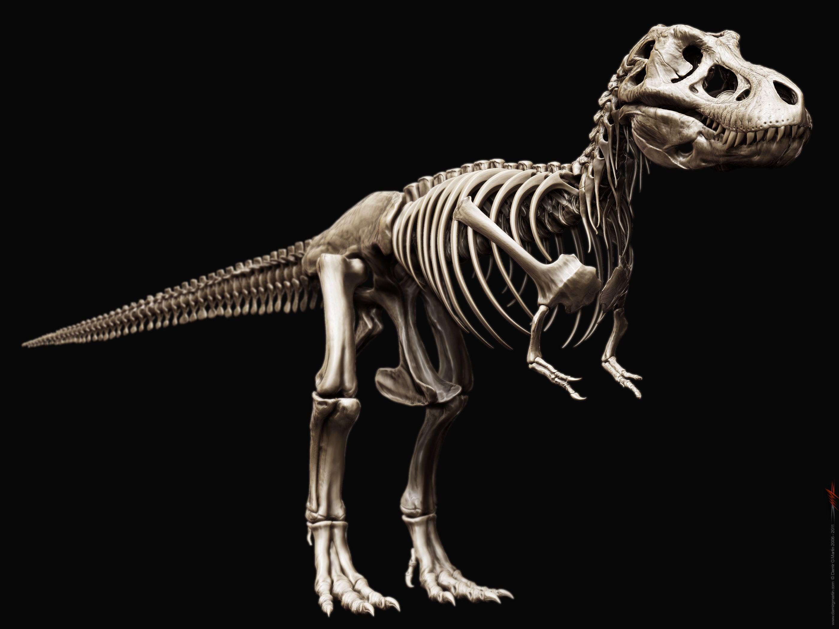 Динозавр скелет в картинках