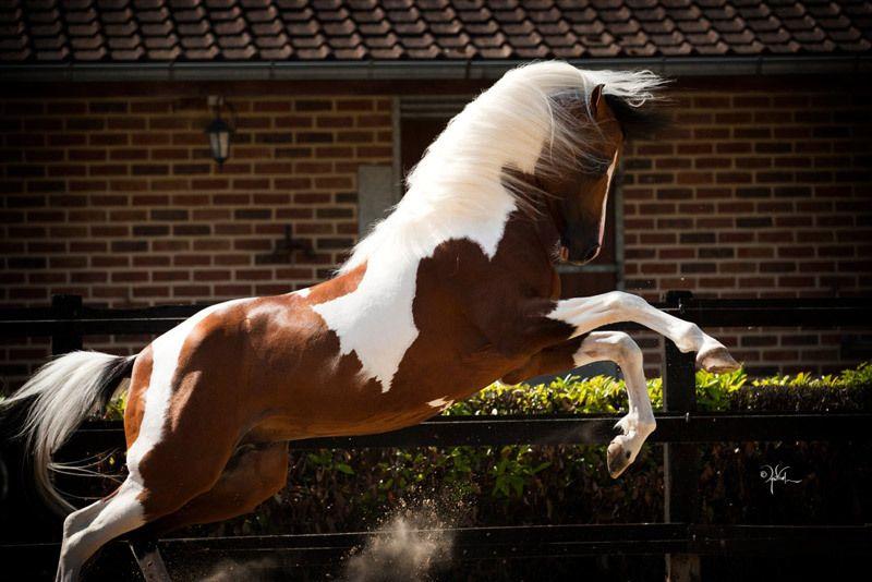 free horses for sale in ohio