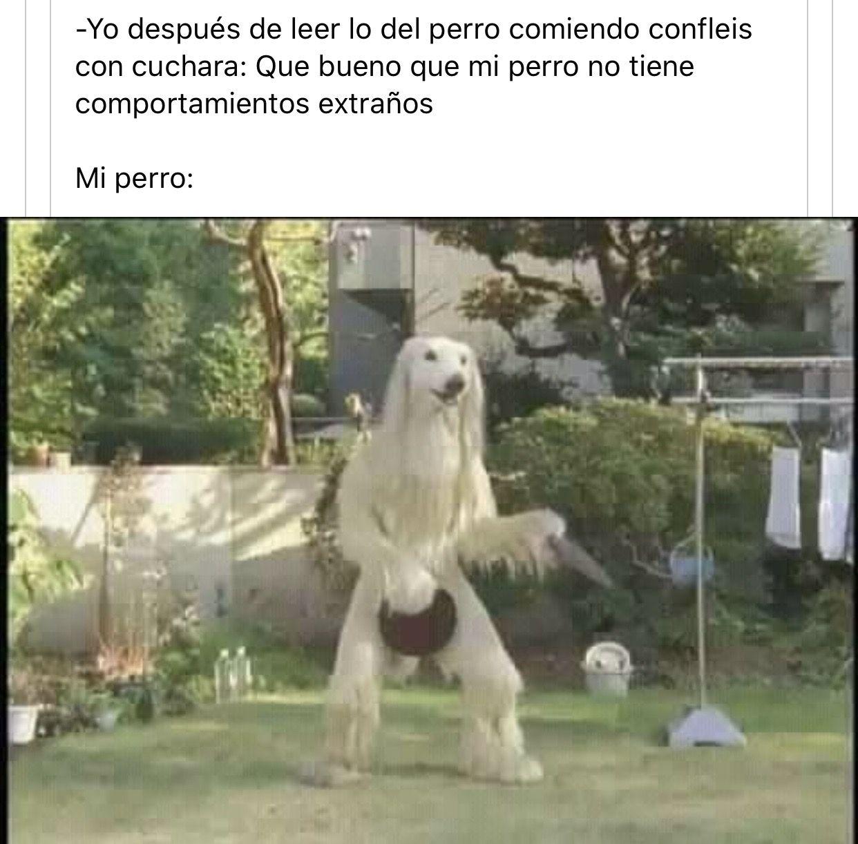 Siempre Expertoanimal Mundoanimal Reinoanimal Animales Naturaleza Mas Memes Divertidos Sobre Perros Imagenes Divertidas De Animales Mascotas Memes
