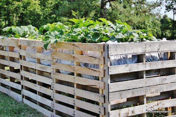 A Pallet Garden Have You Ever Built One Palette Jardin Cloture De Palette En Bois Et Meuble Jardin Palette