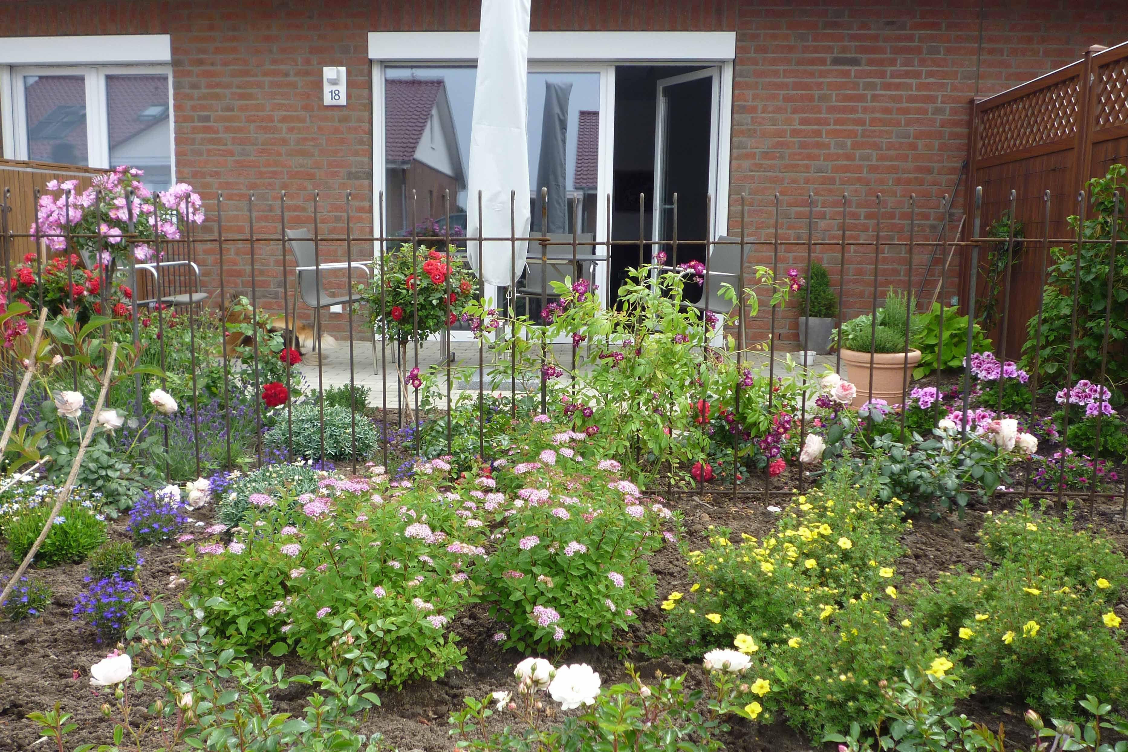 Fertig aufgebaut und mit Kletterrosen bepflanzt ist der Zaun