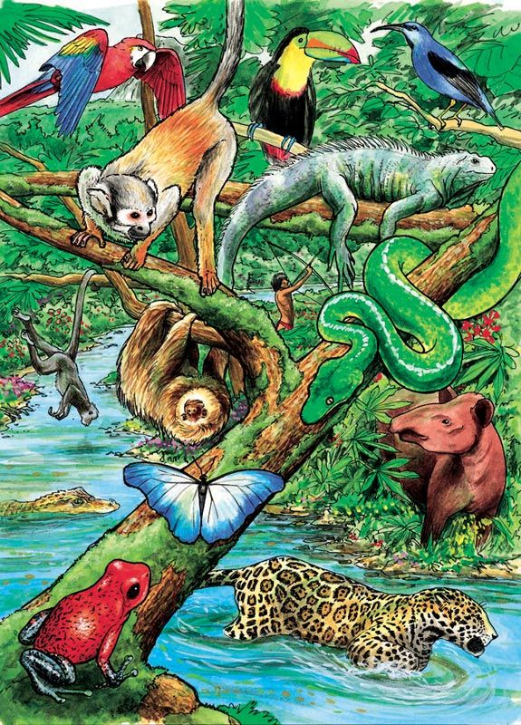 Life In A Tropical Rain Forest Tray Jungle Animals