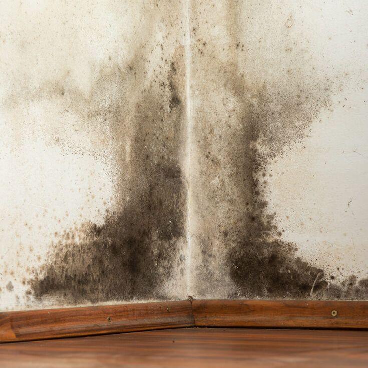 8 Signs You Need A Black Mold Detox Mold In Bathroom Black Mold Symptoms Remove Black Mold