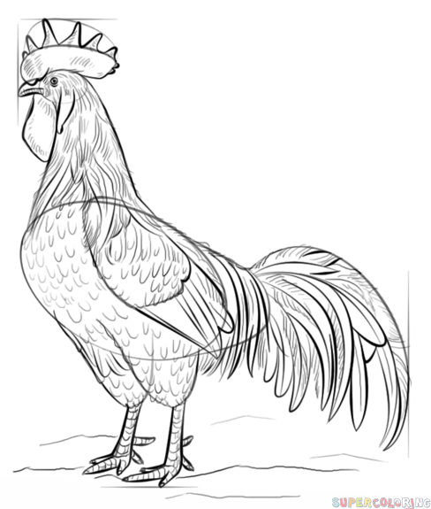 How to draw a Rooster step by step. Drawing tutorials for ...