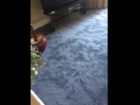 Pin On Flooring Reviews