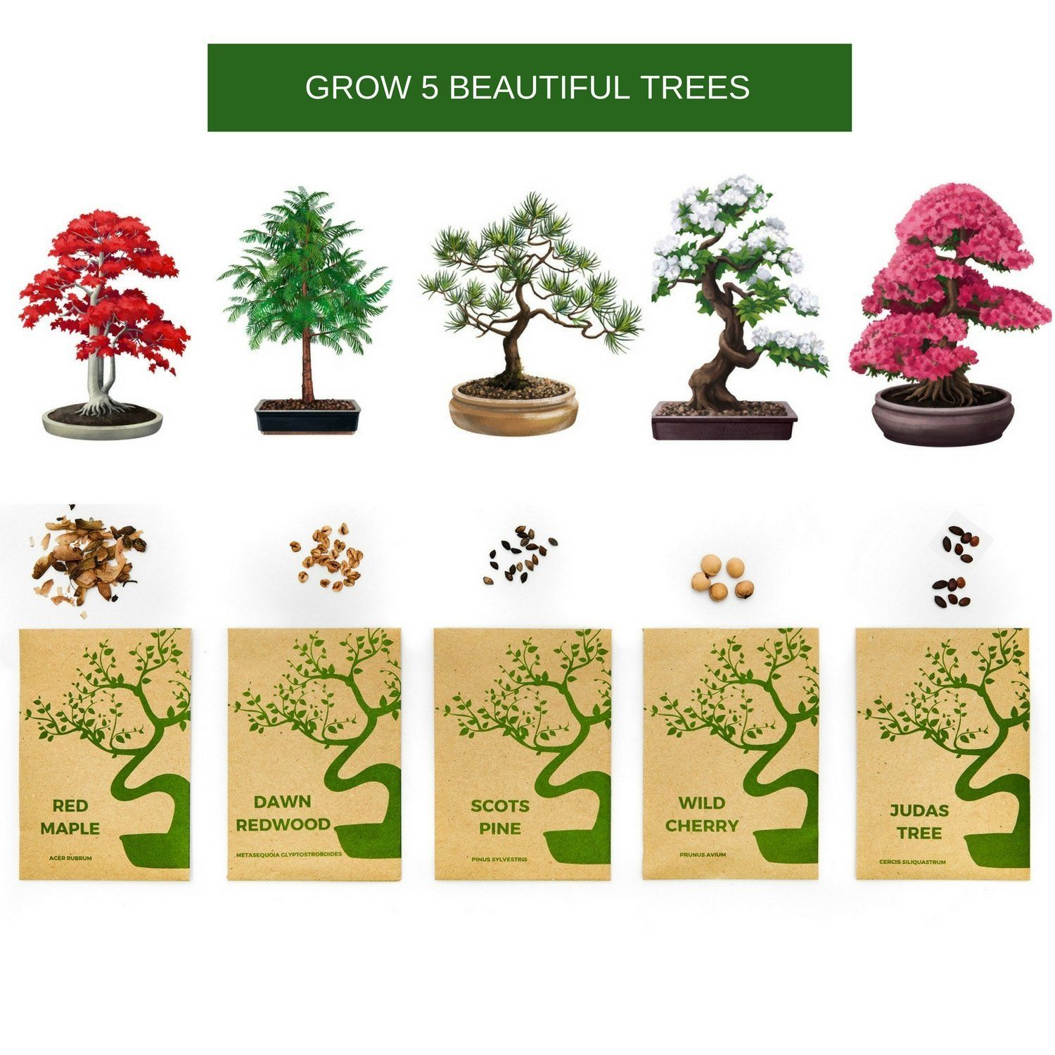 Bonsai Tree Kit Grow Your Own Bonsai Trees From Seeds Gardening Gift Set Includes 5 Tree Species To Plant Indoor Gardening Gift Set Judas Tree Bonsai Tree