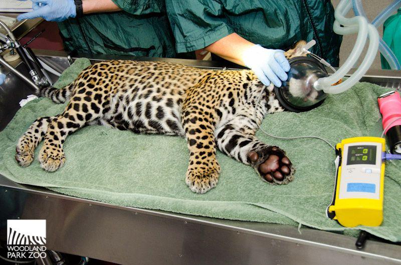Woodland Park Zoo Blog Woodland park zoo, Zoo, Zoo seattle